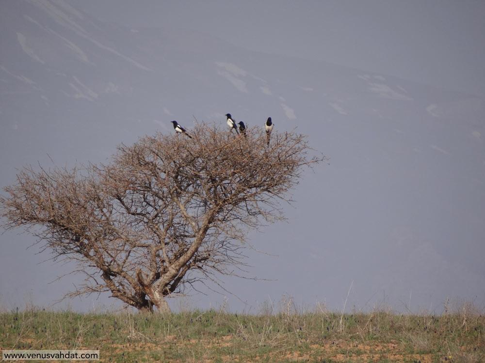 عکاسی طبیعت ایران-شماره4-قزوین