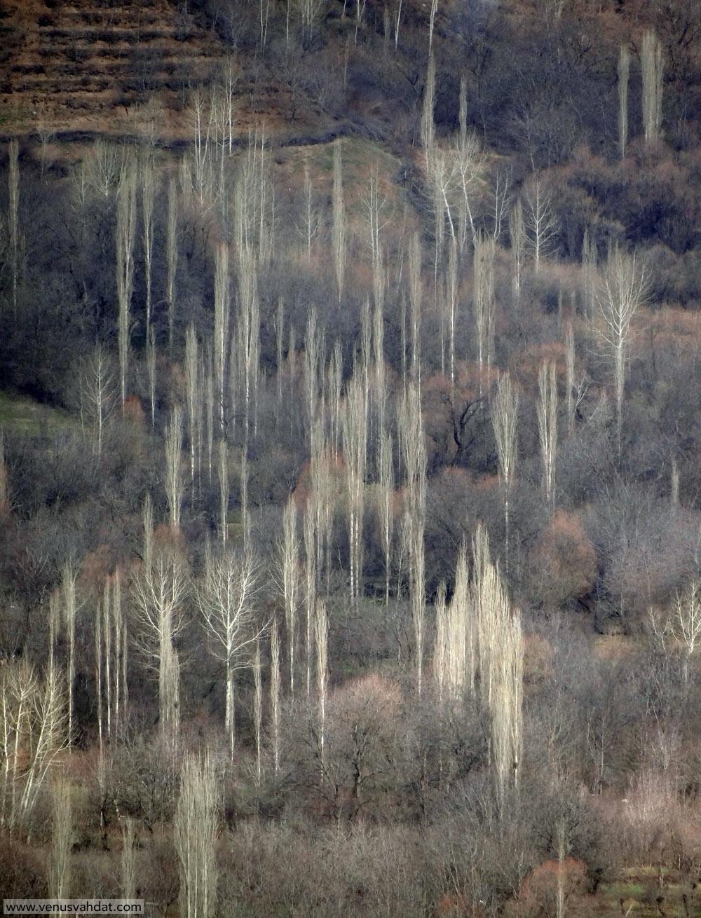 عکاسی طبیعت ایران-شماره 5-قزوین