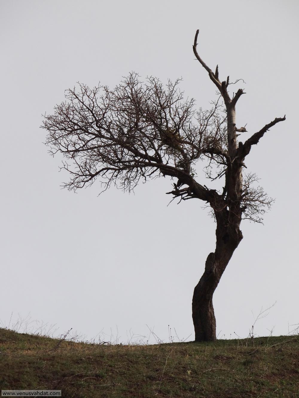 عکاسی طبیعت - تک درخت