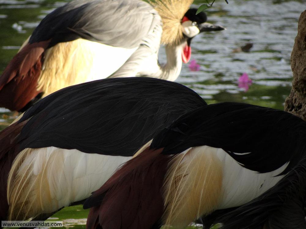عکاسی طبیعت ایران-پرندگان-شماره 1